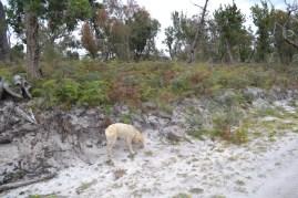 banksia-park-puppies-bluberri-9-of-14