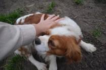 Banksia Park Puppies Chacha