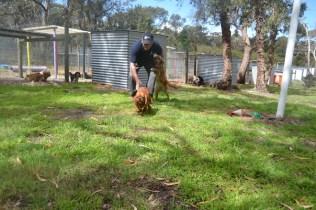 banksia-park-puppies-honey-27-of-33