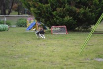 Banksia Park Puppies Lotto - 7 of 22