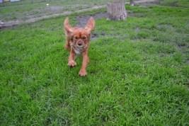 Banksia Park Puppies Salli - 2 of 22