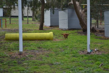 banksia-park-puppies-shayla-12-of-41