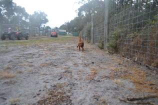 banksia-park-puppies-shiela-11-of-13