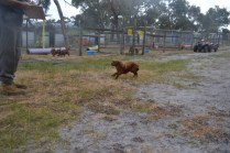 banksia-park-puppies-shona-16-of-21