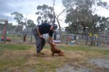 banksia-park-puppies-shona-18-of-21