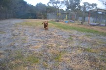 banksia-park-puppies-shona-2-of-21