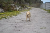 banksia-park-puppies-strawberri-6-of-14