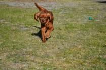 Sheila- Banksia Park Puppies - 16 of 32