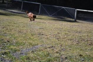 Sheila- Banksia Park Puppies - 19 of 32