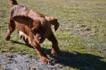 Sheila- Banksia Park Puppies - 28 of 32