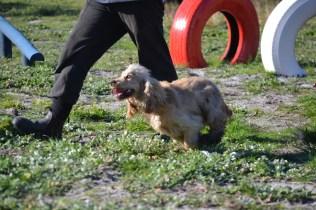 Banksia Park Puppies Jacinta - 11 of 49