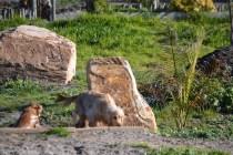 Banksia Park Puppies Jacinta - 5 of 49