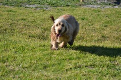 Banksia Park Puppies Jacinta - 7 of 49