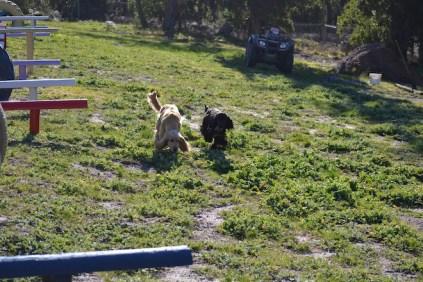 Banksia Park Puppies Jazz - 1 of 41