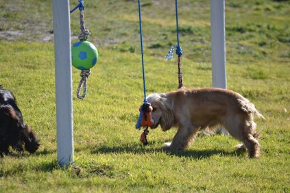 Banksia Park Puppies Jazz - 12 of 41