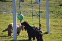 Banksia Park Puppies Jazz - 13 of 41