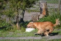 Banksia Park Puppies Jazz - 14 of 41