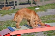 Banksia Park Puppies Jazz - 16 of 41