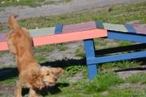 Banksia Park Puppies Jazz - 17 of 41
