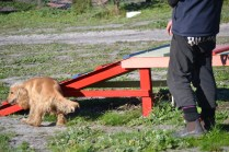 Banksia Park Puppies Jazz - 27 of 41