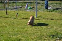 Banksia Park Puppies Jazz - 37 of 41