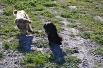 Banksia Park Puppies Jazz - 6 of 41