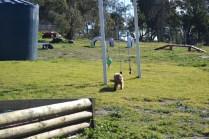 Banksia Park Puppies Jazz - 8 of 41