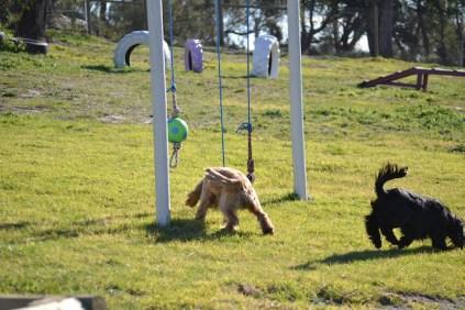 Banksia Park Puppies Jazz - 9 of 41