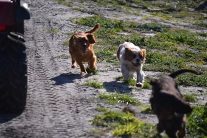 Banksia Park Puppies Ponky - 12 of 36