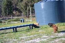 Banksia Park Puppies Ponky - 17 of 36