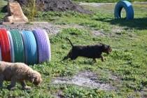 Banksia Park Puppies Ponky - 26 of 36