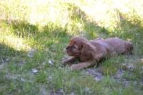 banksia-park-puppies-dana-10-of-14