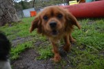 banksia-park-puppies-hailey-21-of-25