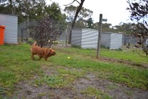 banksia-park-puppies-hannah-2-of-28
