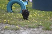 banksia-park-puppies-josefa-13-of-23