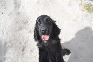 banksia-park-puppies-josefa-22-of-23