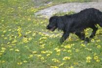 banksia-park-puppies-julia-13-of-14