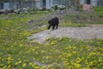banksia-park-puppies-julia-7-of-14