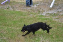 banksia-park-puppies-julia-josepha-14-of-39