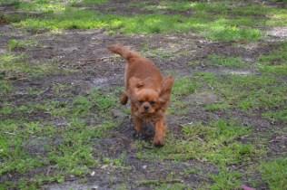 banksia-park-puppies-julsi-10-of-35