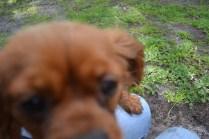 banksia-park-puppies-julsi-14-of-35