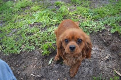 banksia-park-puppies-julsi-20-of-35