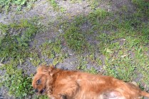 banksia-park-puppies-julsi-33-of-35