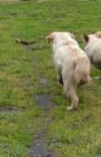 banksia-park-puppies-ocean-10-of-21