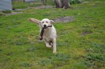 banksia-park-puppies-ocean-13-of-21