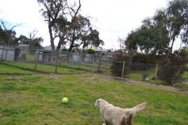 banksia-park-puppies-oko-18-of-29