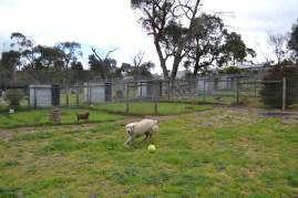 banksia-park-puppies-oko-20-of-29