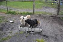 banksia-park-puppies-oko-27-of-29