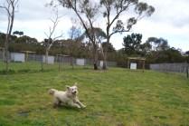 banksia-park-puppies-oko-6-of-29