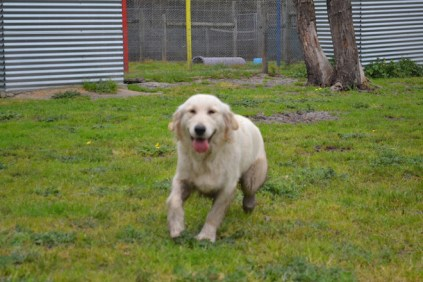 banksia-park-puppies-onnie-13-of-27